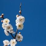 【三文日記】2012年2月