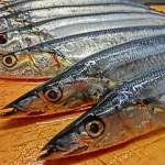 秋刀魚メモ