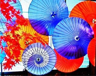 コアラ課長とシェルブールの雨傘