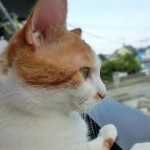 猫村さんのネコムライスを食べてみたい。