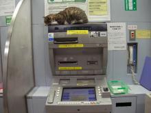 ATM_cat1