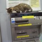 ネコがATMの上で寝ていた!