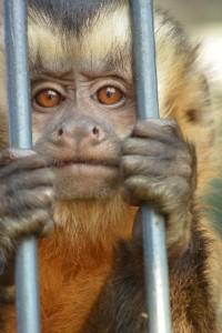 mitsumeru_monkey