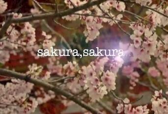 sakura,sakura…
