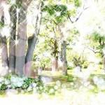 秘密基地は秘密木地のことなのだ。