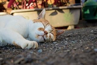 睡眠は脳のデフラグなのだ