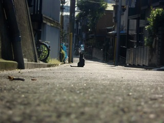 池脇千鶴とサラ・ザビアロフ、そして『大阪物語』